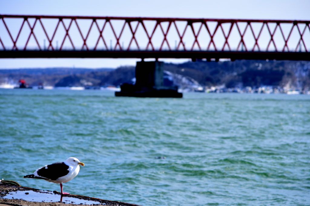 赤い鉄橋と海際のカモメ