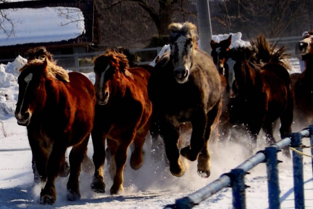 雪原を走る馬群