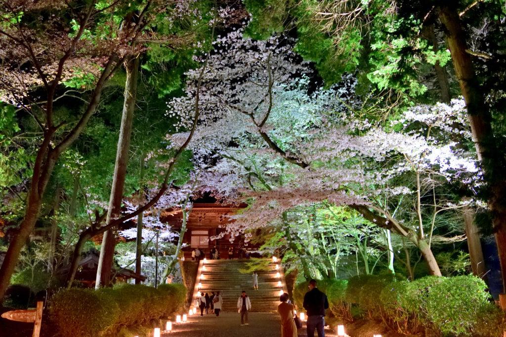 桜に覆われた坂道