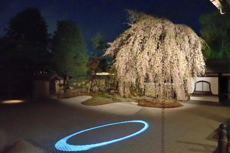 高台寺の桜の2021年ライトアップと見頃は?プロジェクションマッピングの幻想世界?