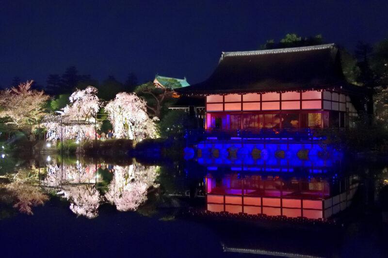 ライトアップされた桜とステージ