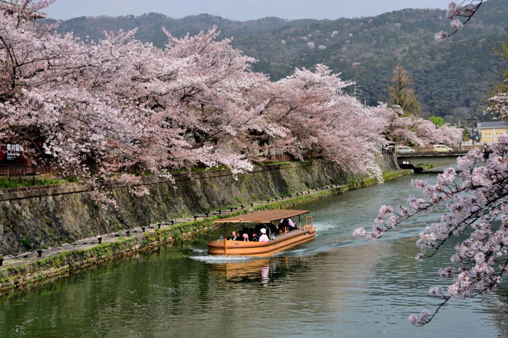 船による桜めぐり