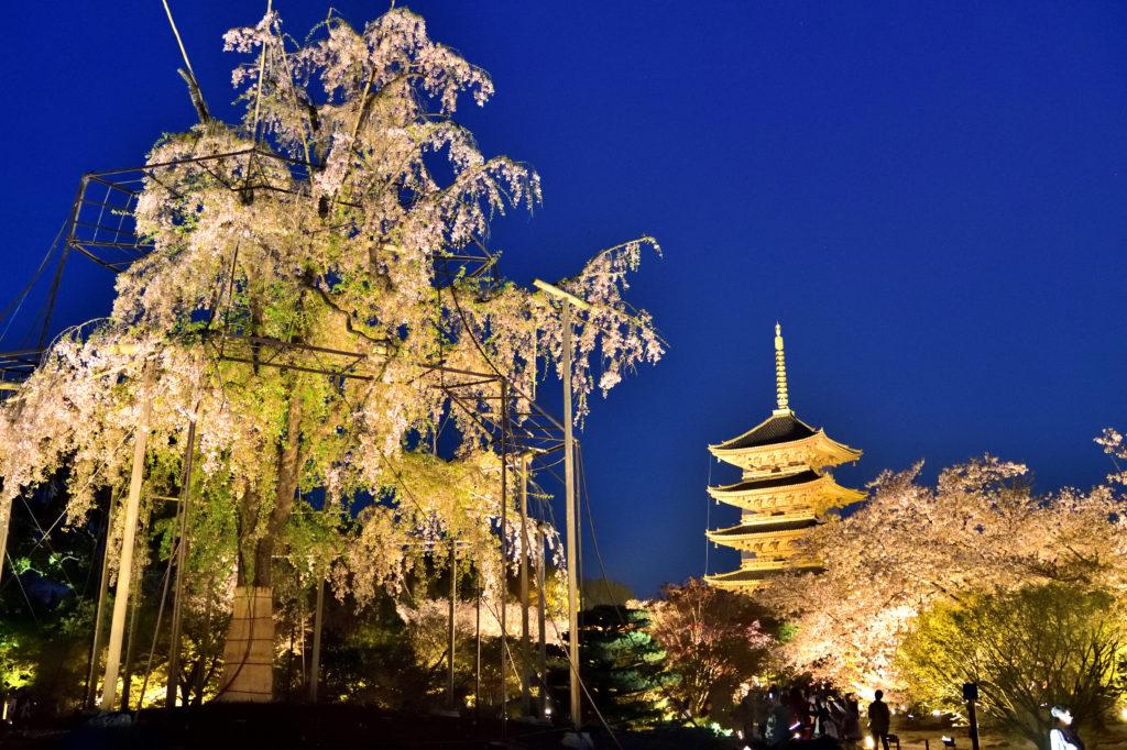 桜と五重塔