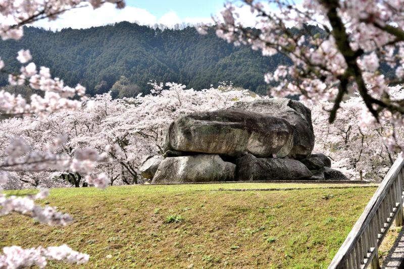 桜に囲まれた石舞台古墳