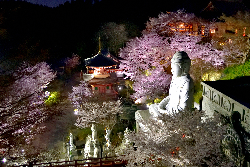 ライトアップされた壺阪寺の桜大仏と石仏群