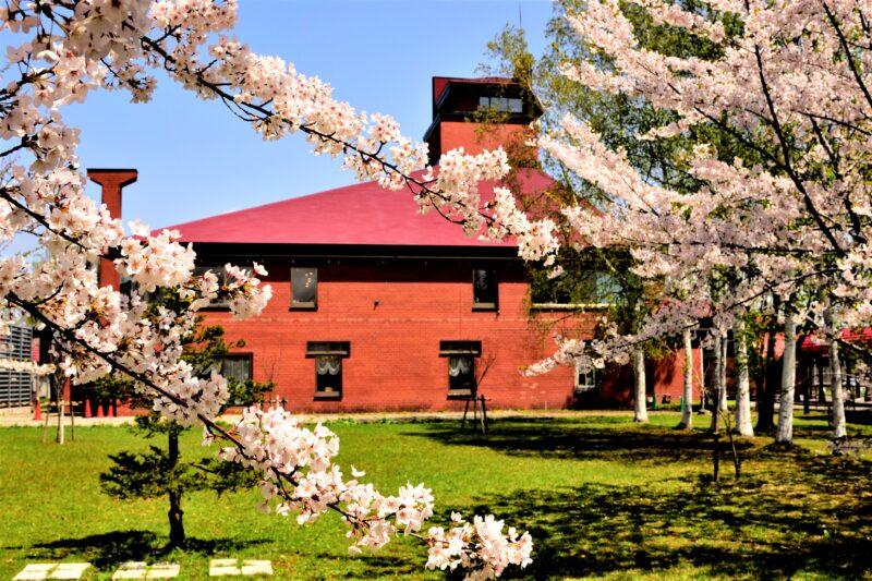 余市川桜並木(余市川桜づつみ)の2021年見頃や開花は?アクセスや駐車場は?