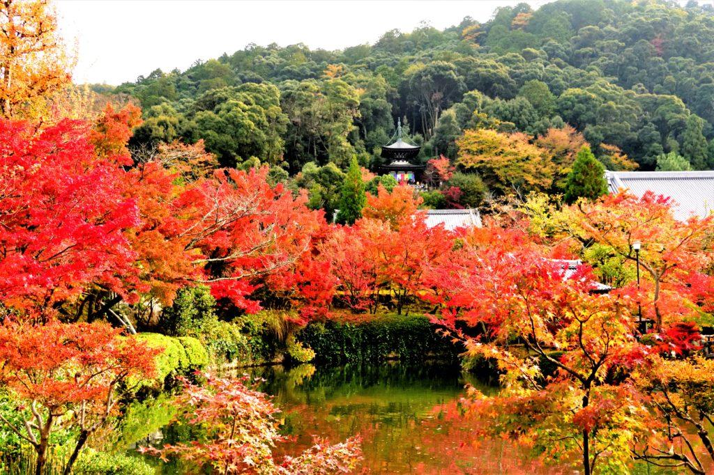 永観堂の多宝塔と放生池の紅葉