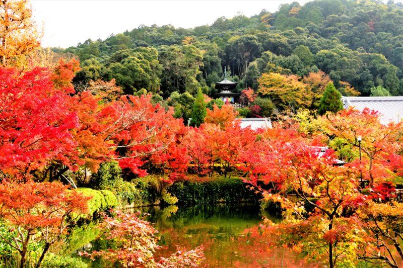 永観堂の池と多宝塔