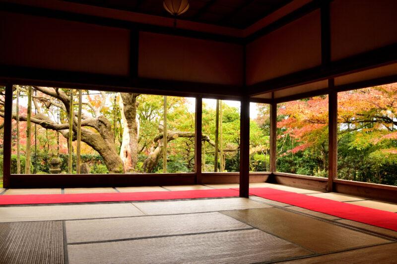 宝泉院の額縁庭園の五葉の松と紅葉