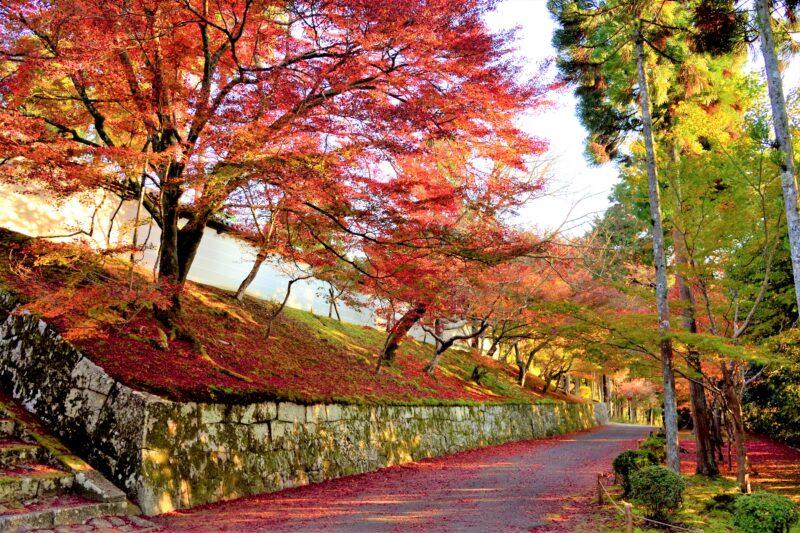 曼殊院の勅使門に続く白壁と紅葉
