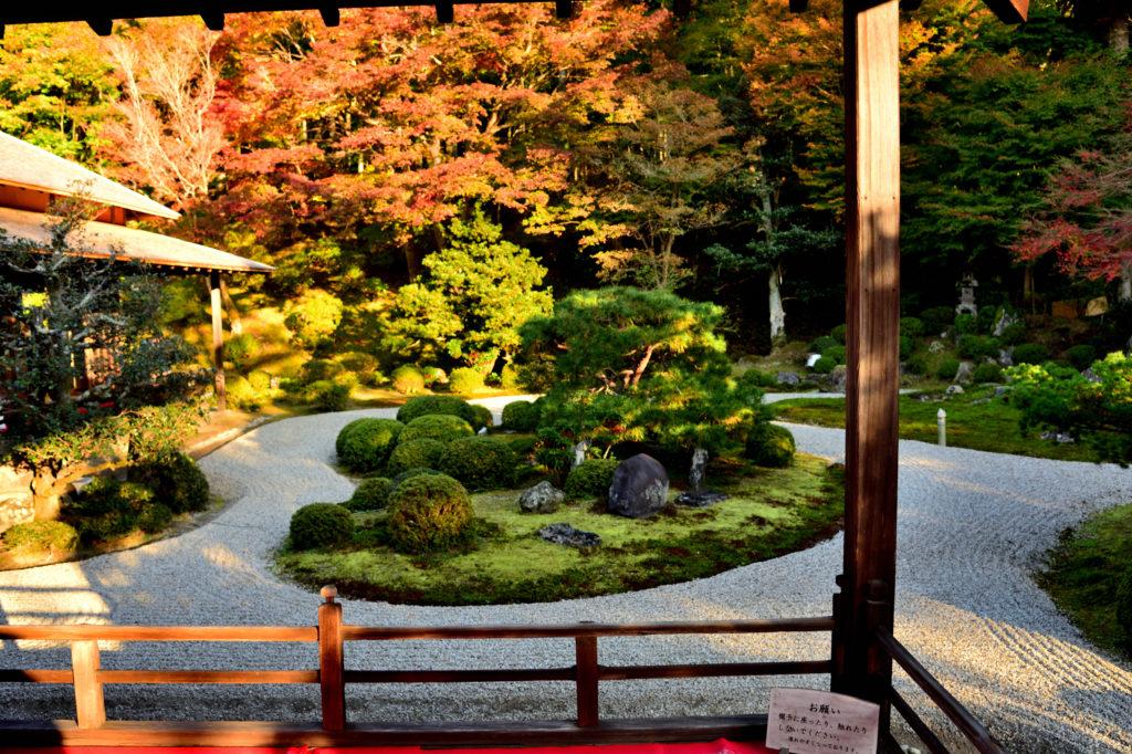 曼殊院の庭園の紅葉
