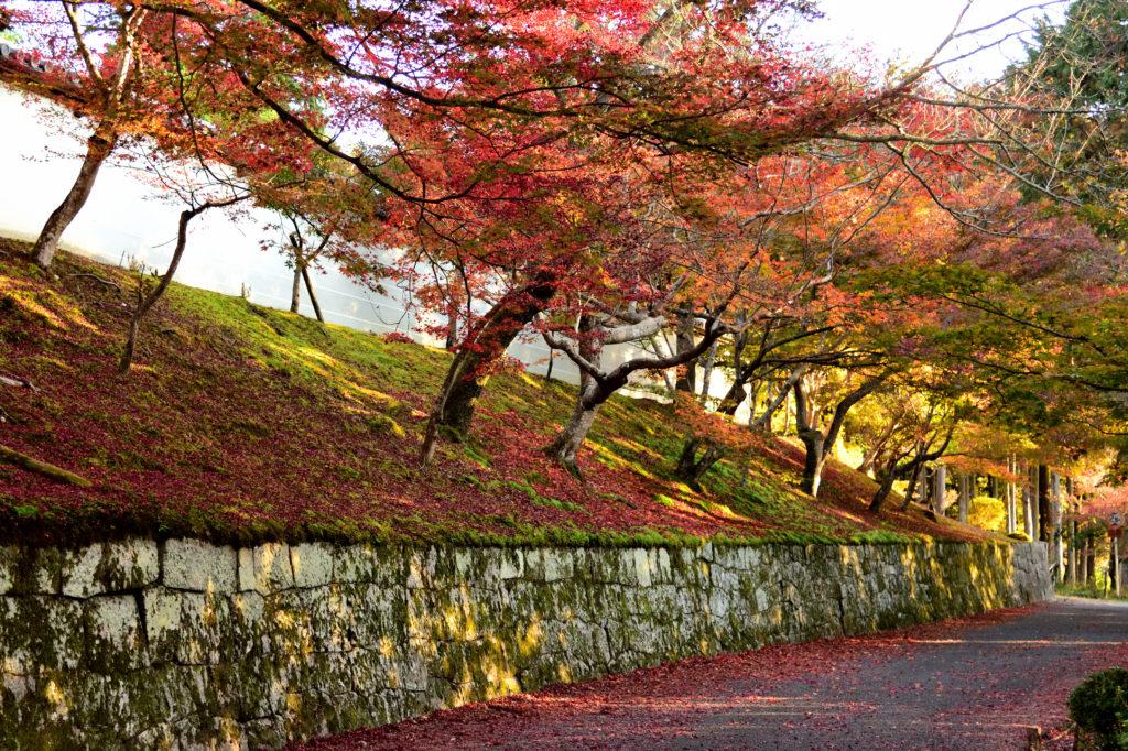 曼殊院の勅使門の石垣と紅葉