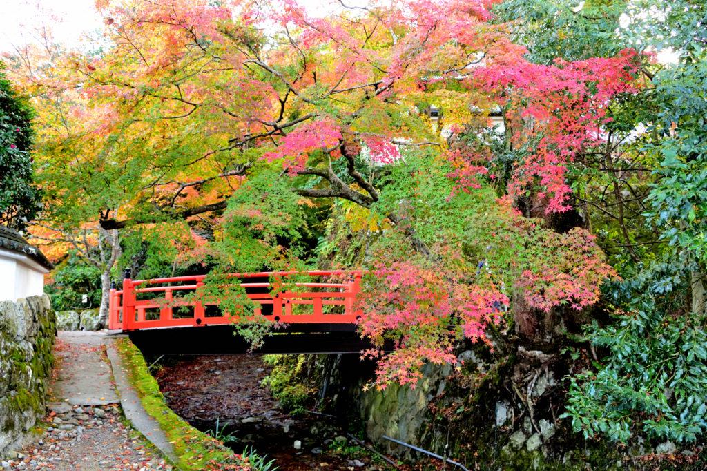 京都の大原の紅葉