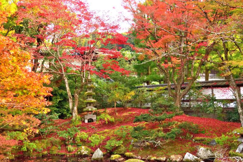 泉涌寺の御座所庭園の赤い落ち葉