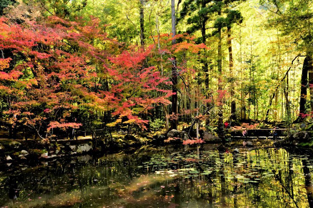 天授庵の池と竹林と紅葉