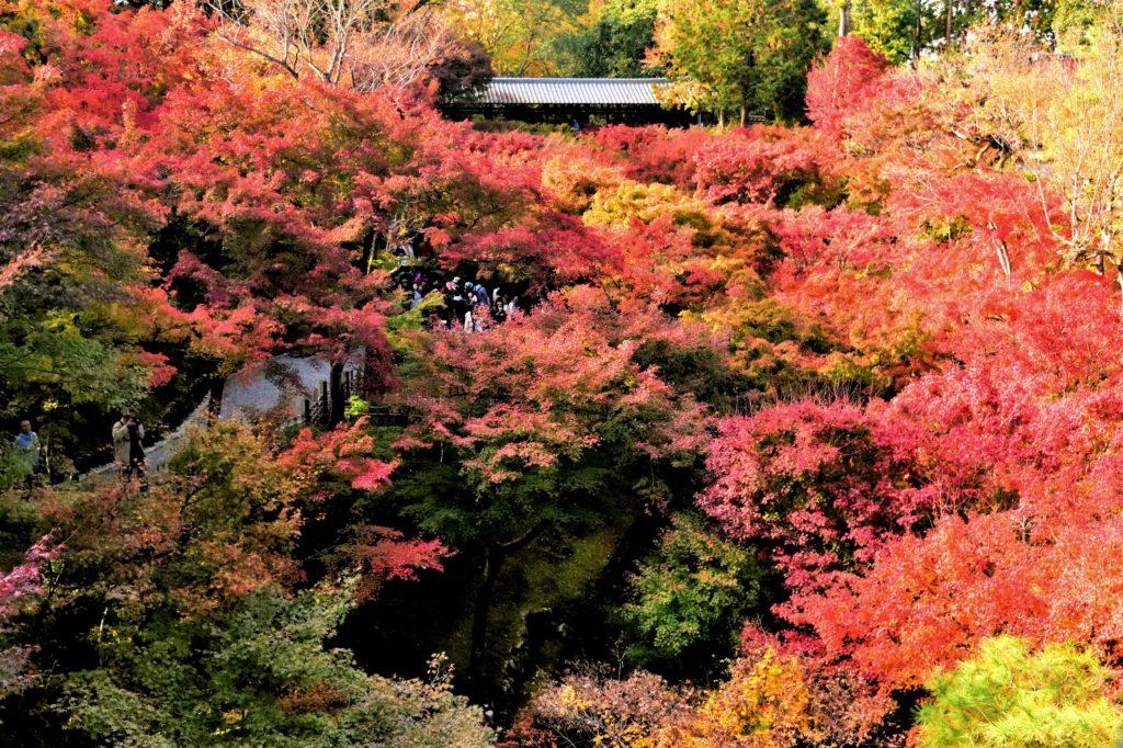 東福寺の通天閣から見た紅葉
