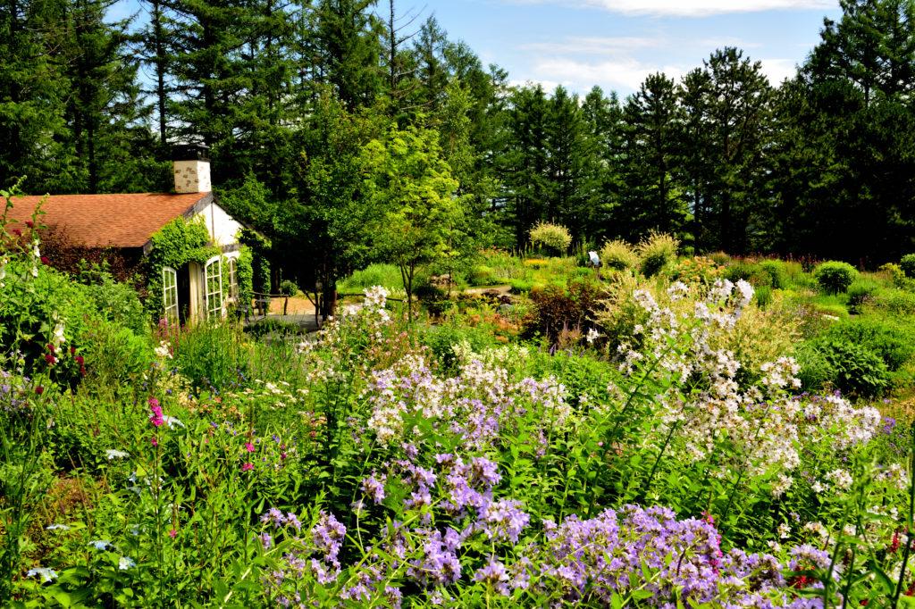 富良野の風のガーデンの夏の花々