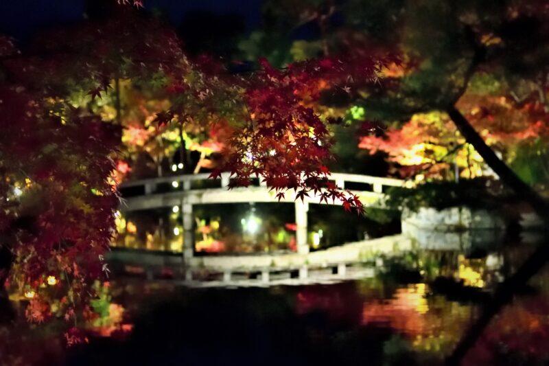 永観堂のライトアップされた橋と紅葉