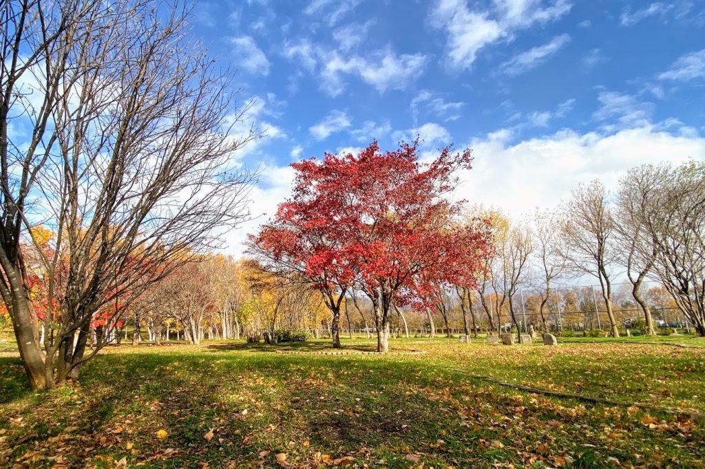 前田森林公園の紅葉 と散紅葉