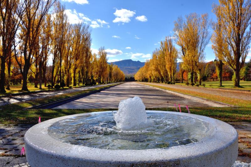 前田森林公園の噴水とポプラ並木