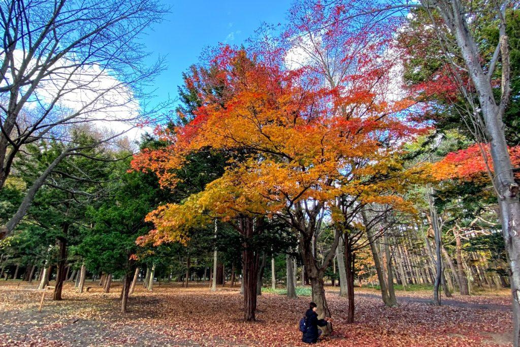 円山公園の紅葉と落ち葉