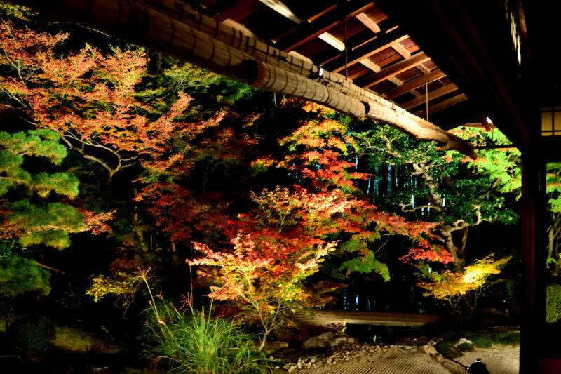 天授庵のライトアップされた方丈庭園