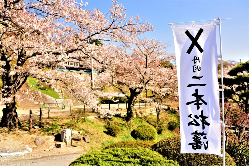 二本松城の旗と桜