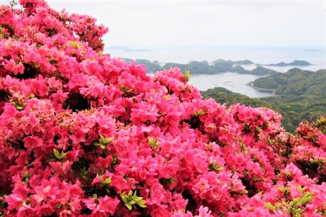 長串山公園のつつじの見頃や2021年開花状況は?つつじまつりやアクセスや駐車場は?