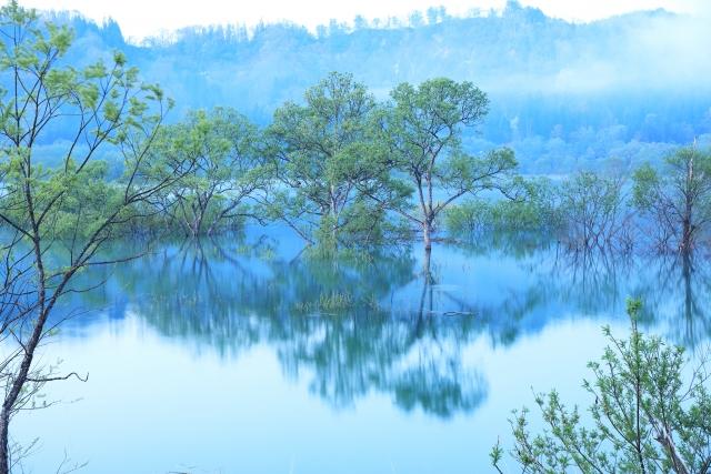 白川ダムの水没林