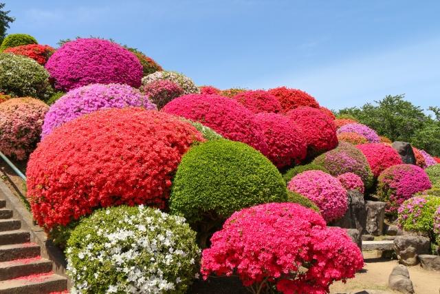 鶴峯公園つつじ祭り2021年(岡谷市)の開花や見頃は?アクセスや駐車場は?