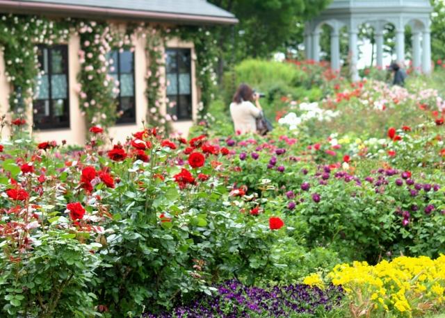 びわ湖大津館のイングリッシュガーデンのバラ