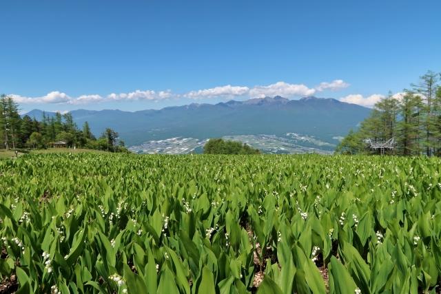 富士見パノラマリゾート・入笠湿原のすずらん