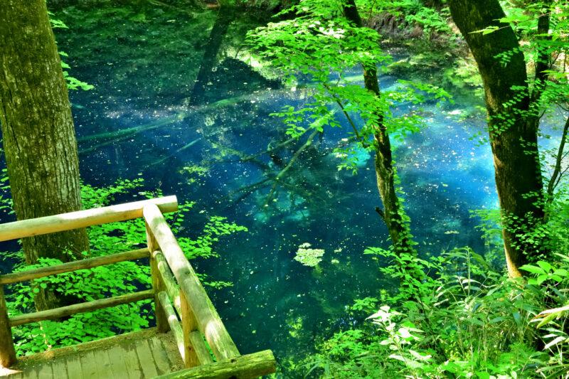 白神山地の青池