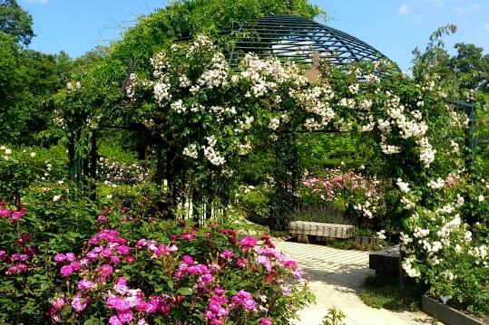 えこりん村・銀河庭園のバラ