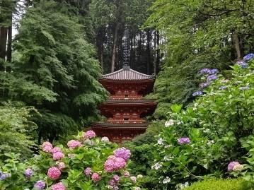岩船寺のあじさいの2021年の見頃や開花状況は?アクセスや駐車場は?