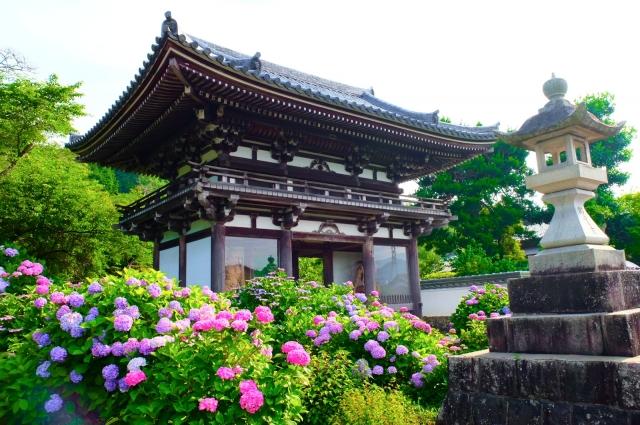 丹州観音寺の紫陽花