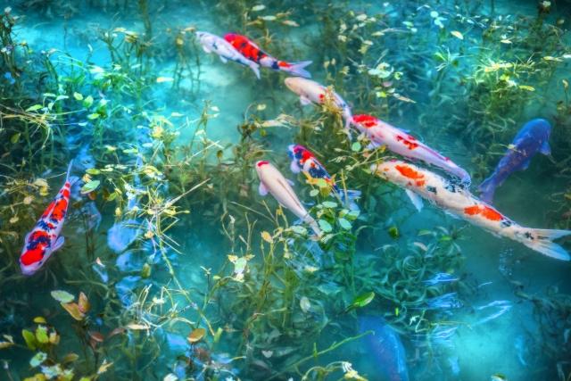 岐阜のモネの池(名もなき池)