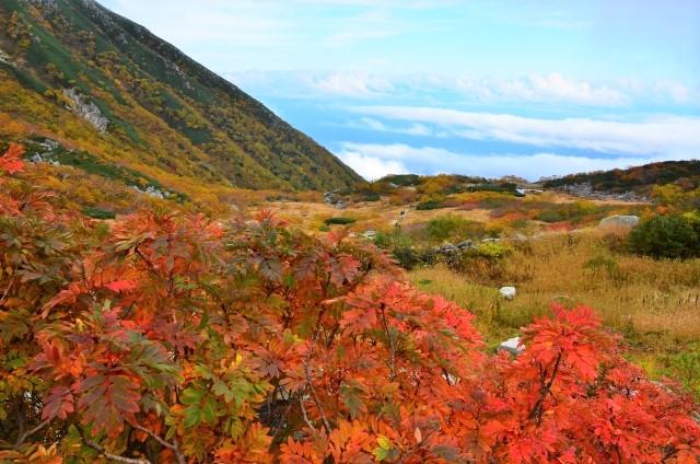 千畳敷カール・駒ヶ岳ロープウェイの紅葉