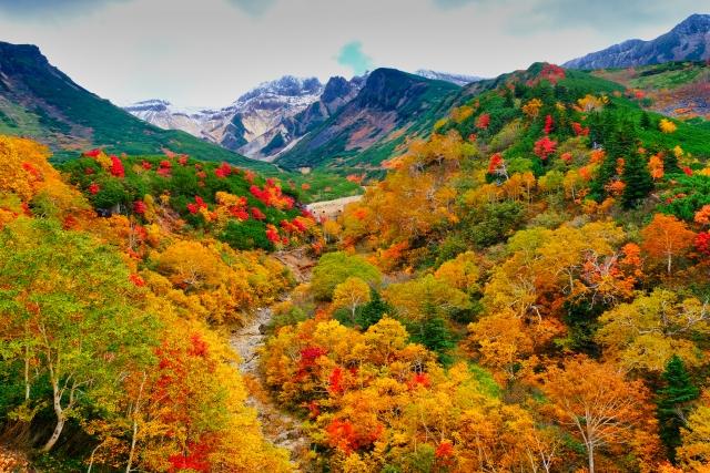 十勝岳の紅葉